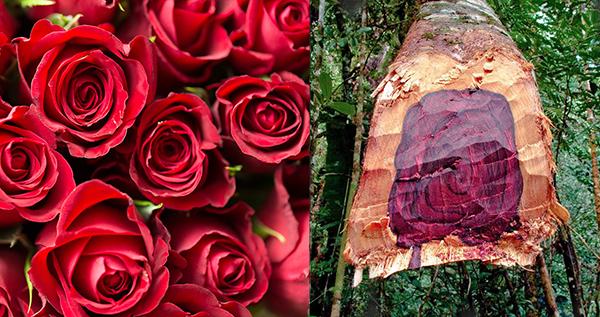 Rose and Rosewood.jpg