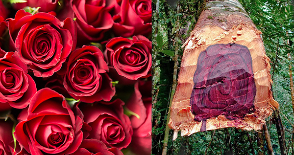 Rose and Rosewood.jpg